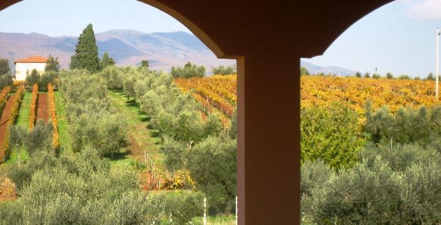 vinícola na Itália