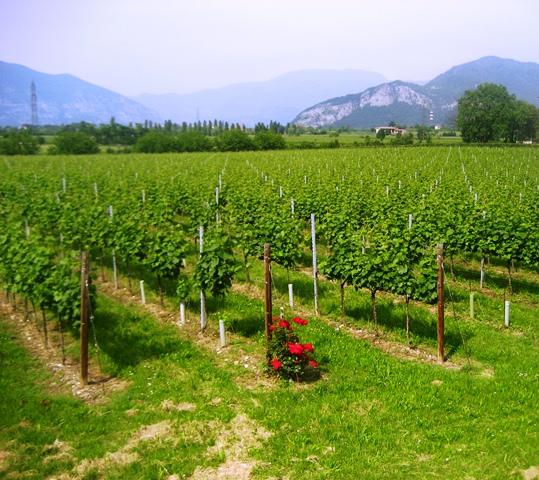 Degutação de vinhos